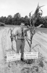 Corn grown with and without Corn Till Nitrogen Irrigation, circa 1973 (Call no. PhC68.1.219.1-34)
