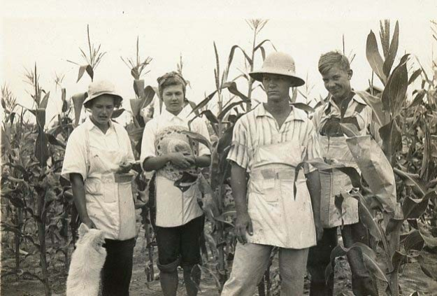 Mary Coker (second from left) and her college classmate Phyllis Hickney (far left) working in a Hartsville, S.C., cornfield, 1942. Coker and Hickney worked on corn cultivation during a summer break from Vassar.